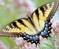 Butterflies of North America Screen Saver and Wallpaper Screenshot 0