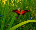 Amazing Butterflies screensaver Screenshot 0