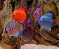 Aquarium Fishes Free Screensaver Screenshot 0