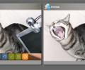 Video Recorder Webcam Recording Script Screenshot 0